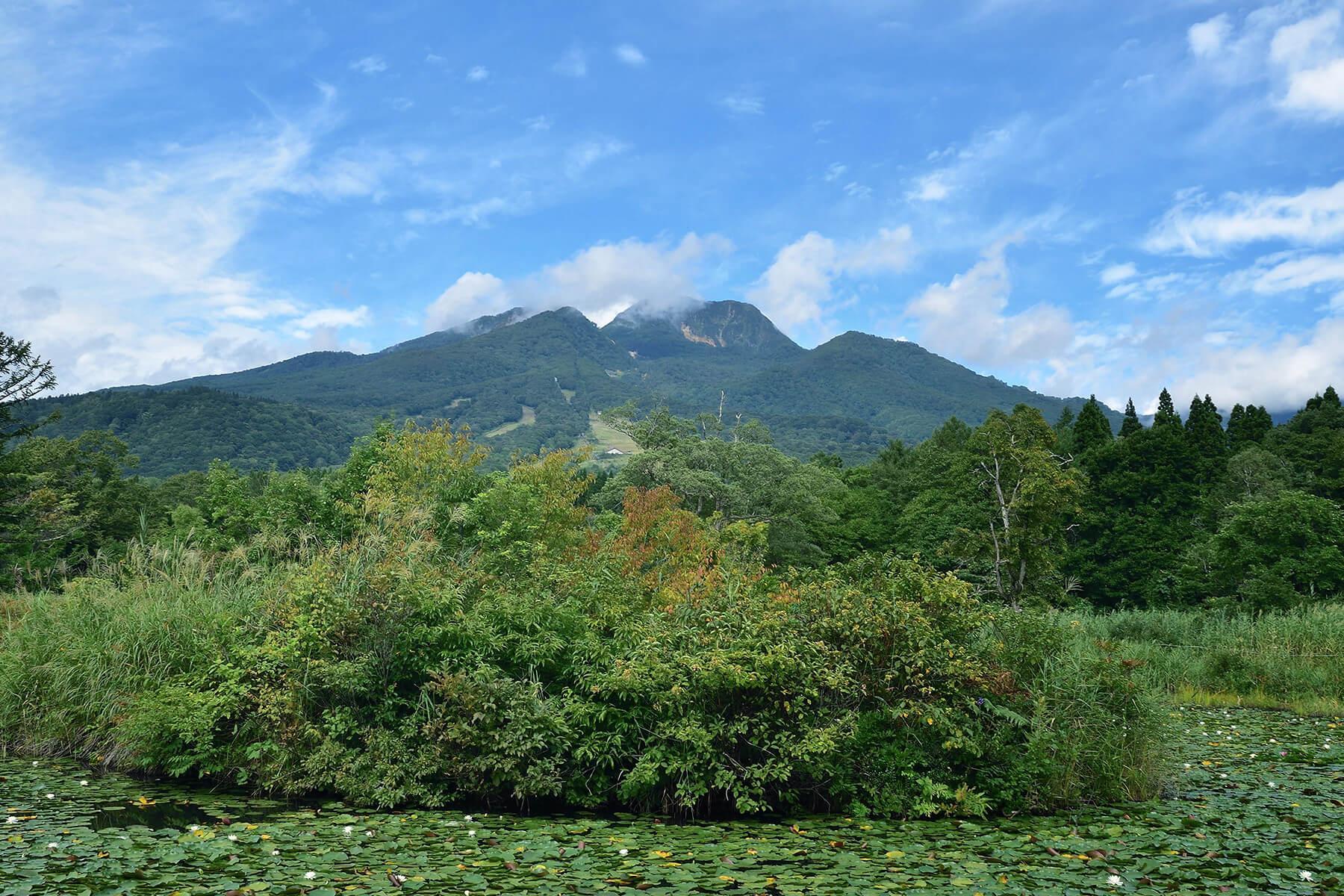 妙高山 緑