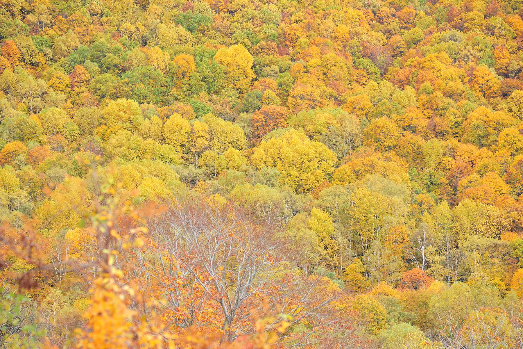 妙高高原周辺の紅葉カレンダー