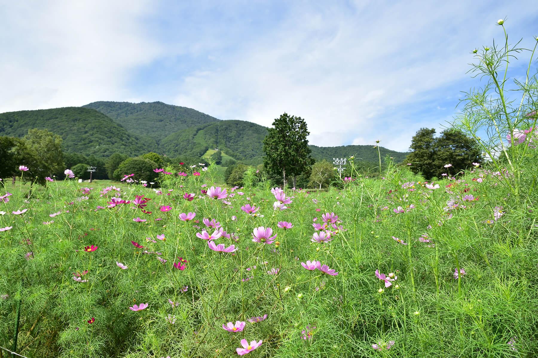 〈黒姫高原と野尻湖〉グリーンシーズンの黒姫高原