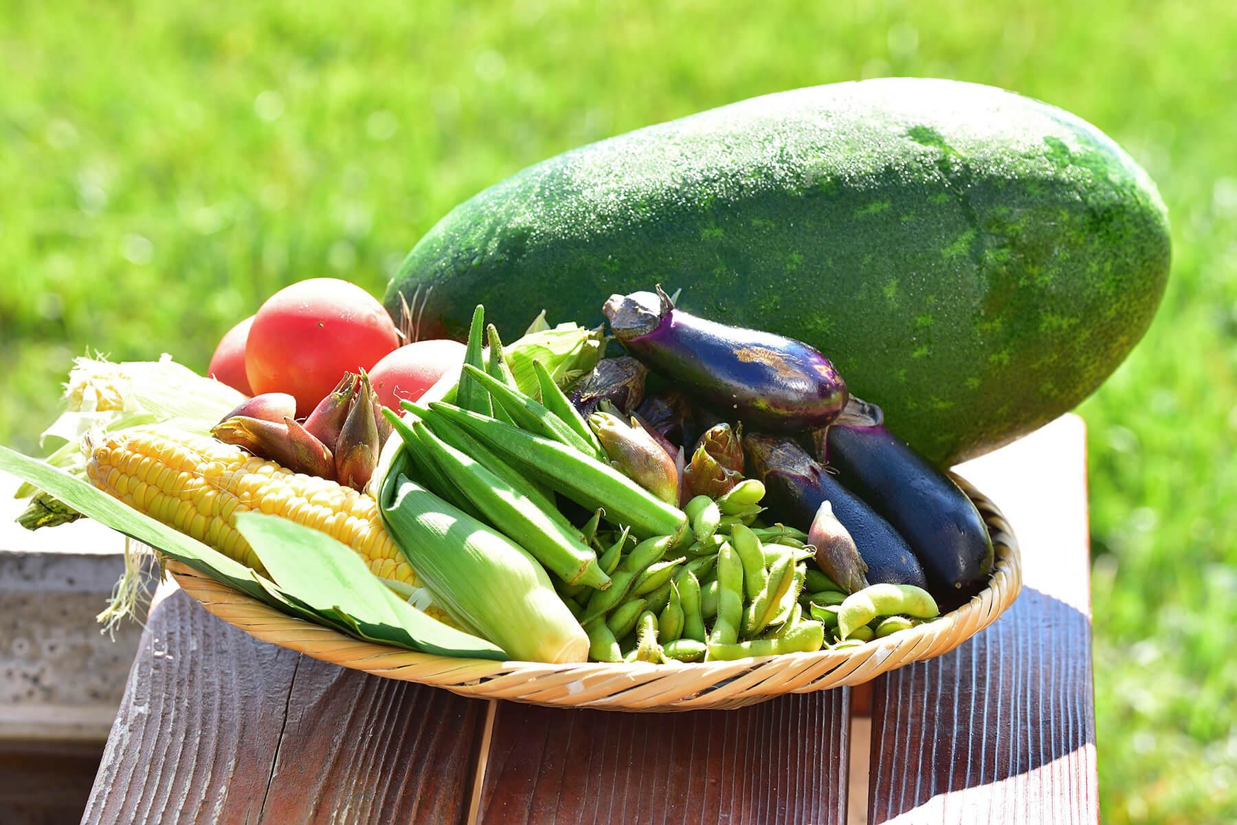 地元の新鮮な高原野菜と魚カレンダー〈夏〉